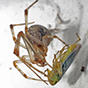 common_house_spider_88x88.png
