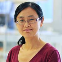 Yumei Li, Ph.D.